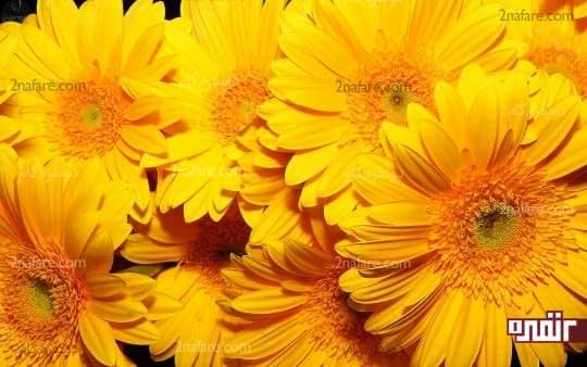 زرد، نشان دهنده ی اعتماد به نفس و خوش بینی است