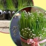 تزیین سبزه برای سفره هفت سین