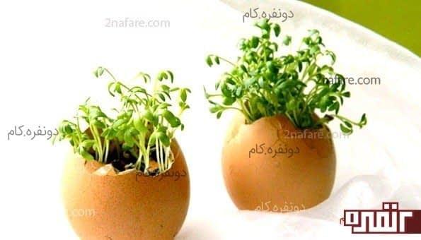 سبزه عید در تخم مرغ