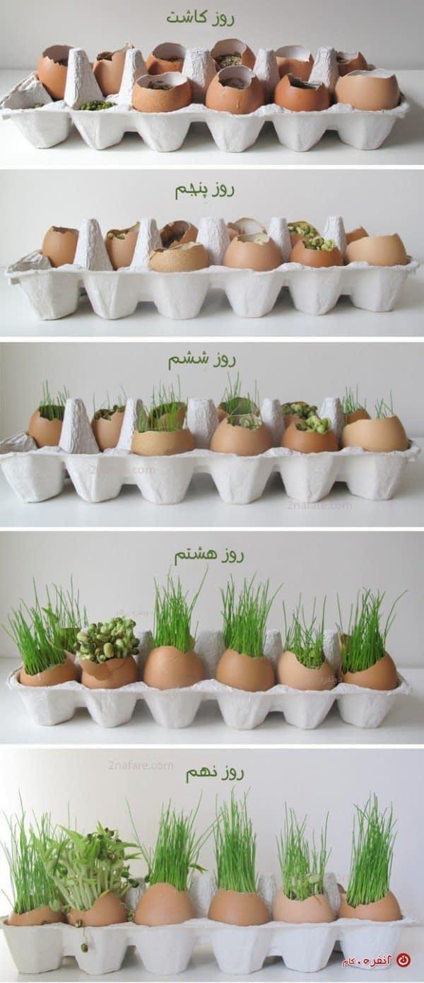 مراحل رشد سبزه