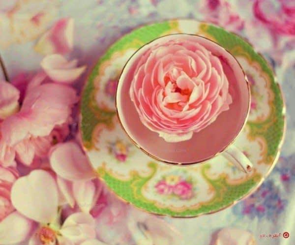 چای گل رز و شفافیت پوست