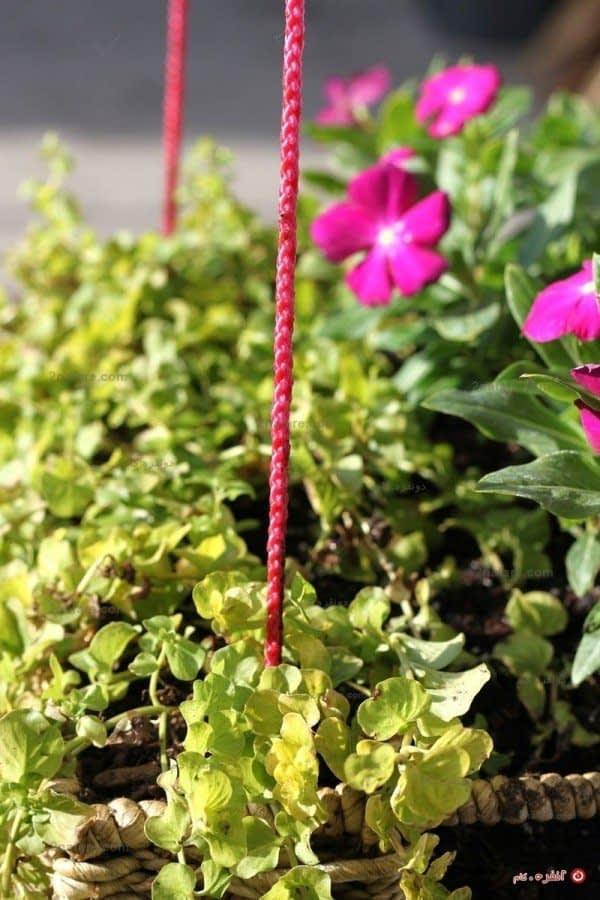 سبد گل زیبا برای منزل