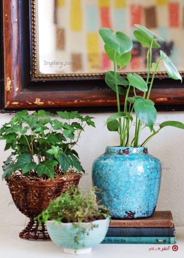 گلدان و کاسه سفالی برای گیاهان برگ سبز