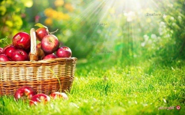سیب سرخ