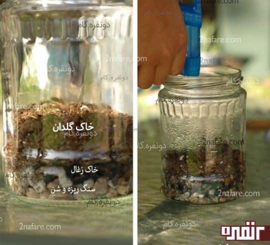 لایه های گیاه واریوم در شیشه مربا