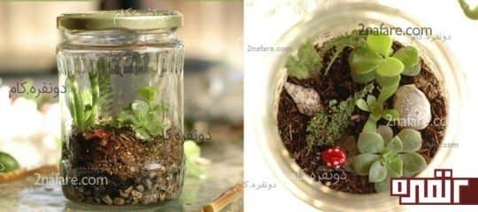 گیاه واریوم با شیشه مربا