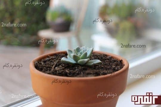بخش بالایی گیاه
