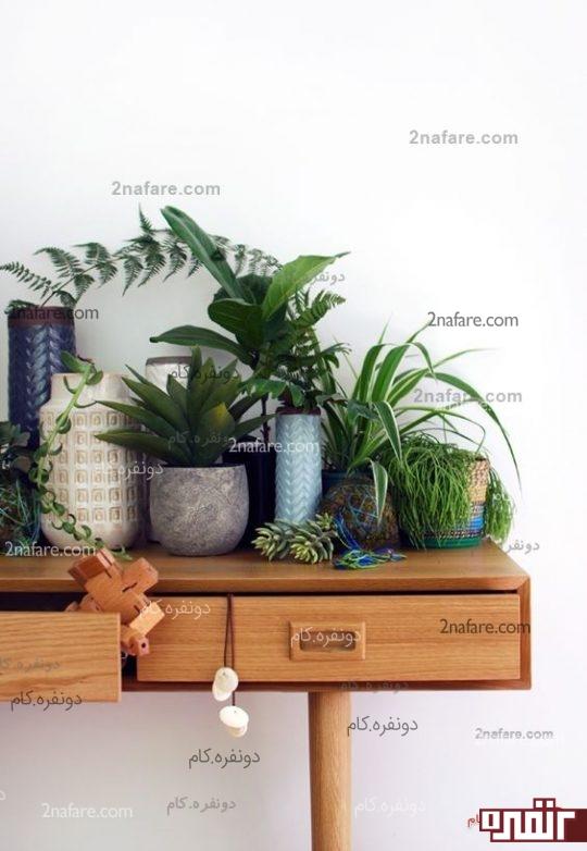 گیاهان مناسب برای تصفیه هوا