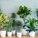 اشتباهات رایج در نگهداری از گیاهان