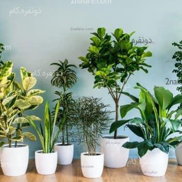 اشتباهاتی که در نگهداری از گیاهان مرتکب میشویم