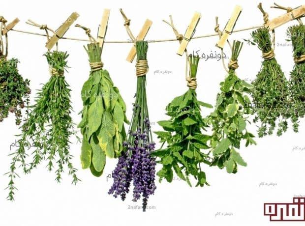خشک کردن متداولترین روش نگهداری از سبزیجات
