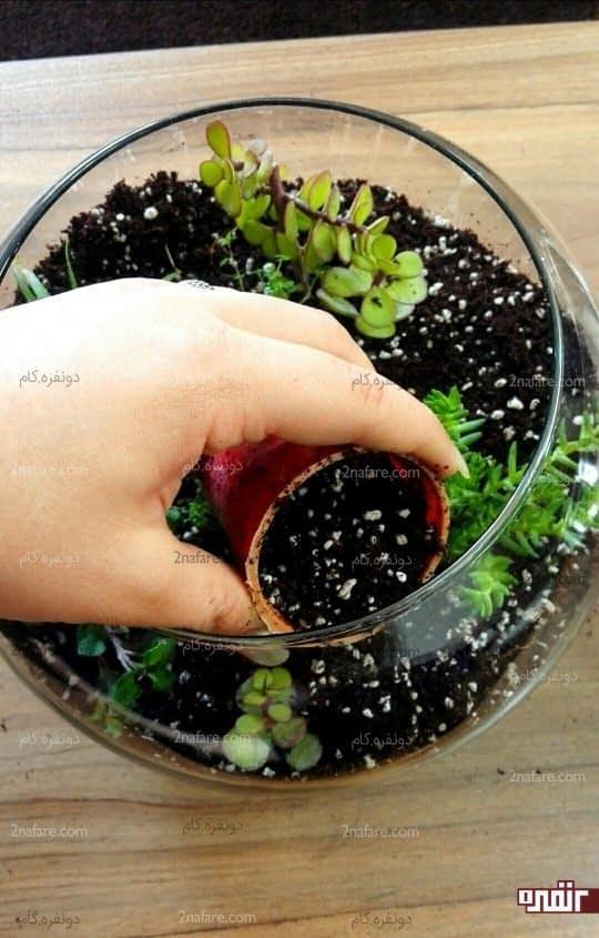 پرکردن اطراف گیاه با خاک