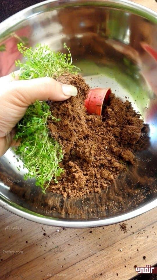 ریشه گیاه بعد از جدا کردن خاک اضافی