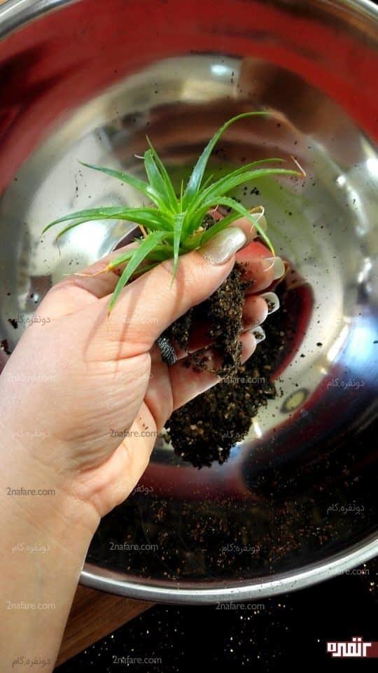 تکاندن خاک گیاه