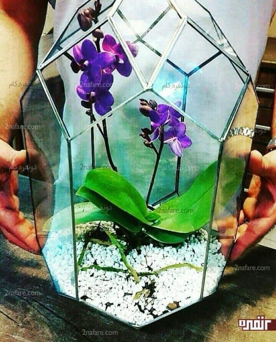 تراریوم , باغ شیشه ای زیبا