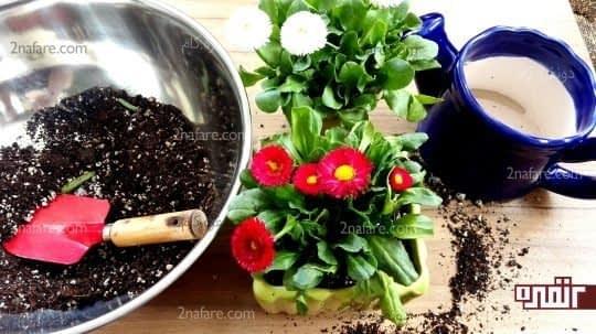 گیاه رو منتقل کنید و اطرافشو پر کنید