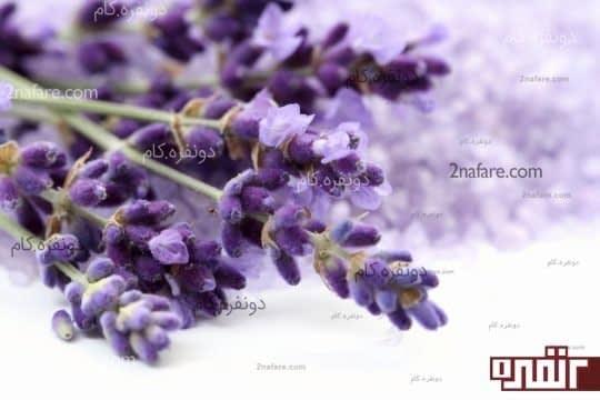 استفاده ی دارویی از گل های گیاهان