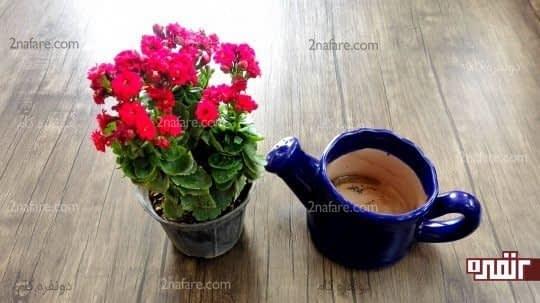 گلدان مناسب برای تعویض گلدان کالانکوآ