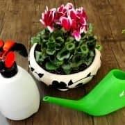 به گیاه جدید آب بدید و اونو غبار پاشی کنید
