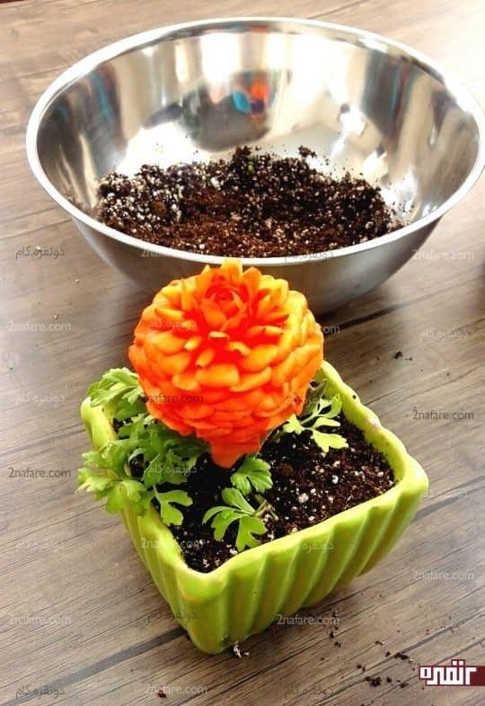 اطراف گیاه رو با خاک پر کنید