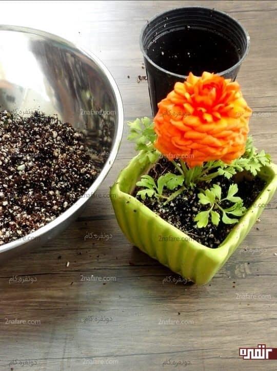 گیاه رو به گلدان جدیدش انتقال بدید