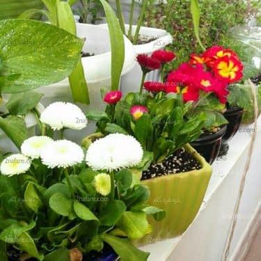تاثیر محیطی گیاهان آپارتمانی به لحاظ زیبایی