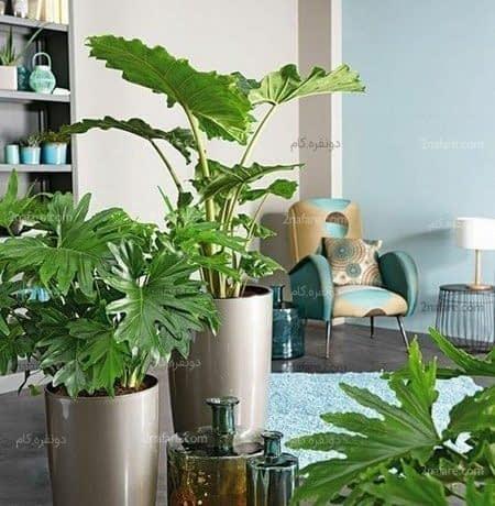 استفاده از گیاهان در فضا وایجاد صحنه های جذاب بصری
