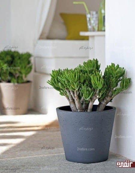 فنگ شویی وچگونگی استفاده از گیاهان