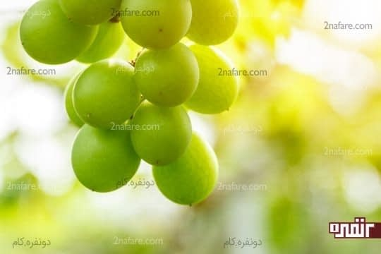 انگور و غوره یک چربی سوز مفید