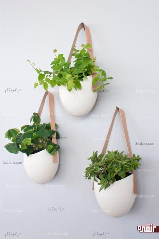 - Hangende zimmerpflanzen ...