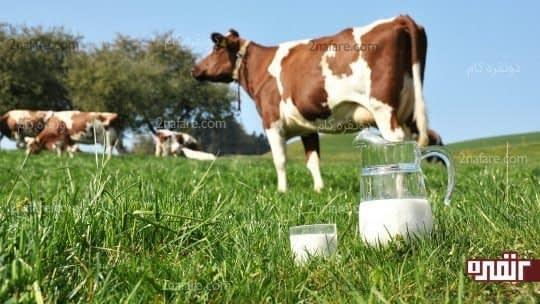شیر خام