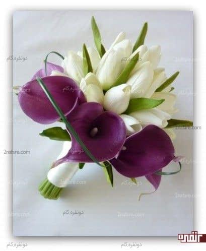 ترکیب گل لاله و شیپوری