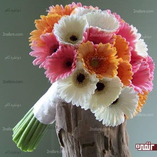 تنوع رنگی زیبای دسته گل ژربرا
