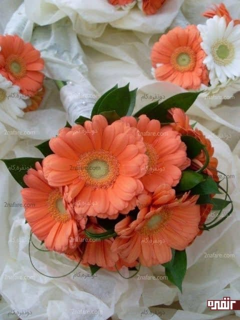 دسته گل عروس با گل ژربرا