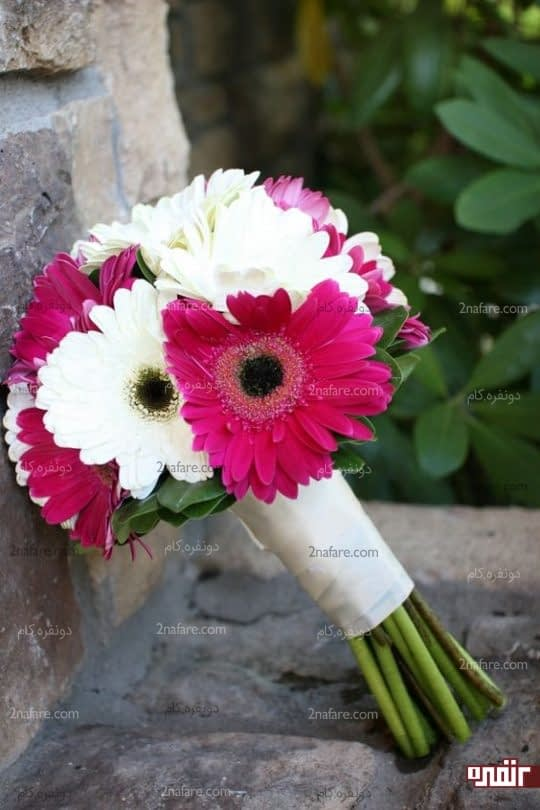دو رنگ زیبای دسته گل عروس با ژربرا