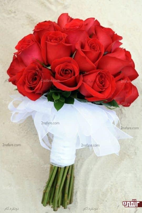 رز زیبا و قرمز رنگ