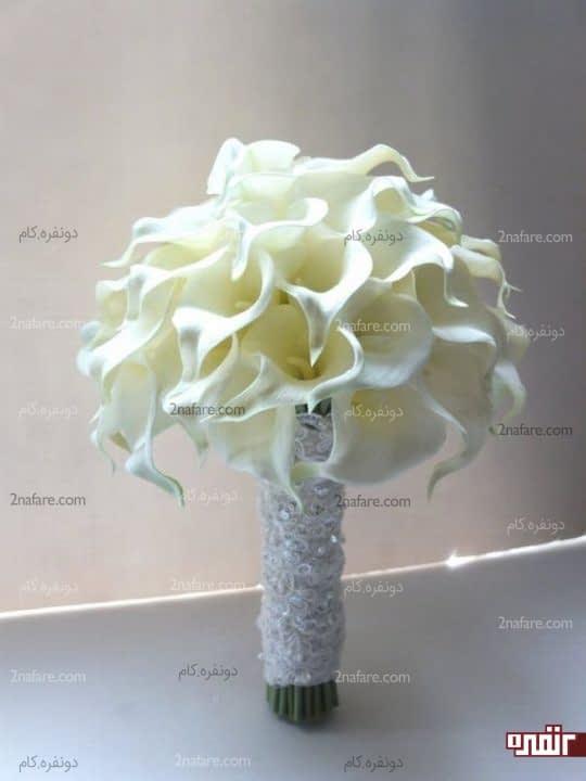 شیپوری سفید و جذاب