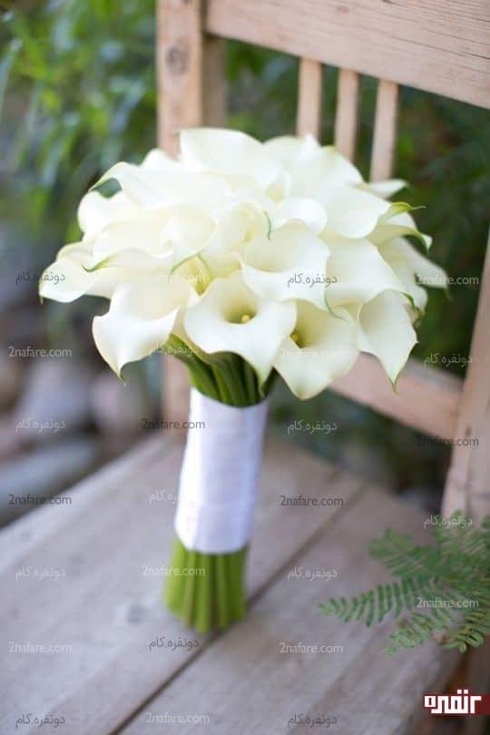 شیپوری سفید