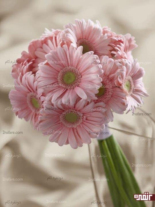 ژربرا صورتی و خوشرنگ دسته گل عروس