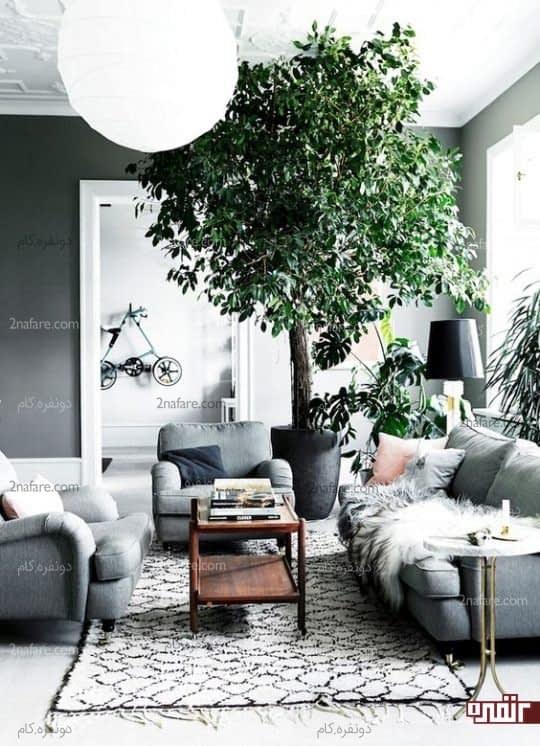 گیاهان سبز و زیبا در اتاق نشیمن