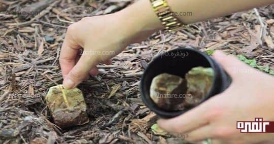 استفاده از چای کیسه ای بعنوان کود