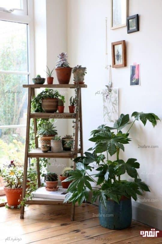 کنج سبز و دنج برای تزیین خانه