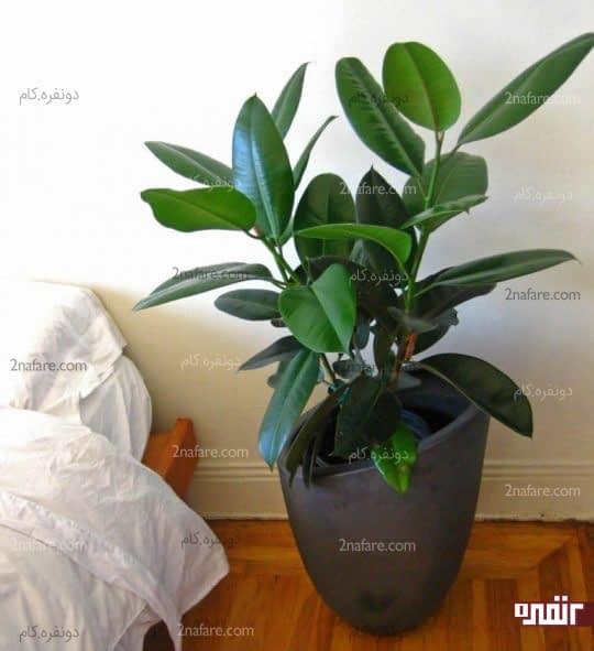 گیاهان طبیعی و تصفیه ی هوای خانه