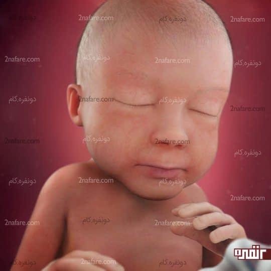 هفت ماهگی جنین