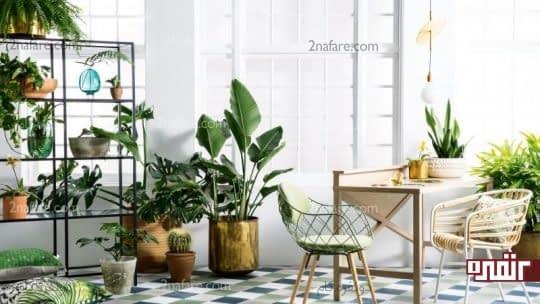 از انواع گیاهان و در سایزهای مختلف در کنار هم استفاده کنید