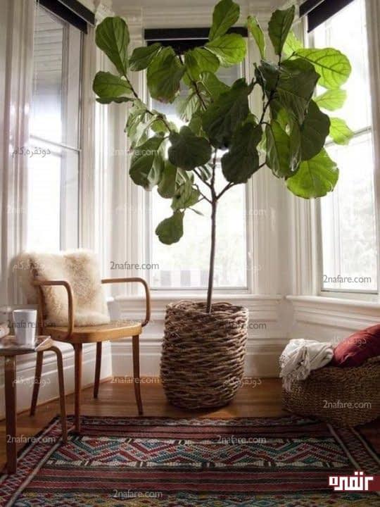 استفاده از گل ها و گلدان های خاص در دکور منزل