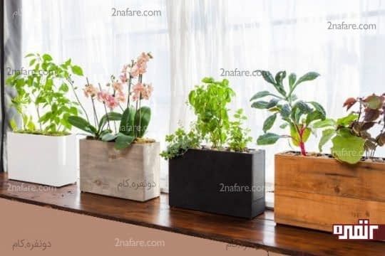 انتخاب فضای مناسب و نور کافی برای کاشت سبزی در آپارتمان