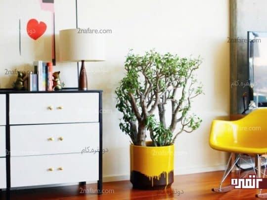 رنگ شاد و جذاب گلدان