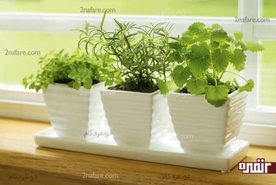 کاشتن سبزی در گلدان های زیبا و استفاده از نور طبیعی