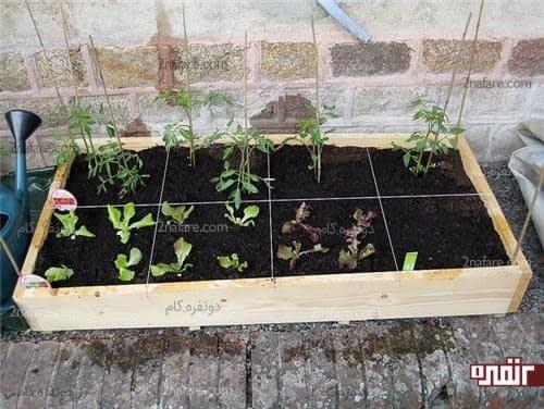کرت بندی در باکس چوبی برای کاشت انواع مختلف سبزیجات